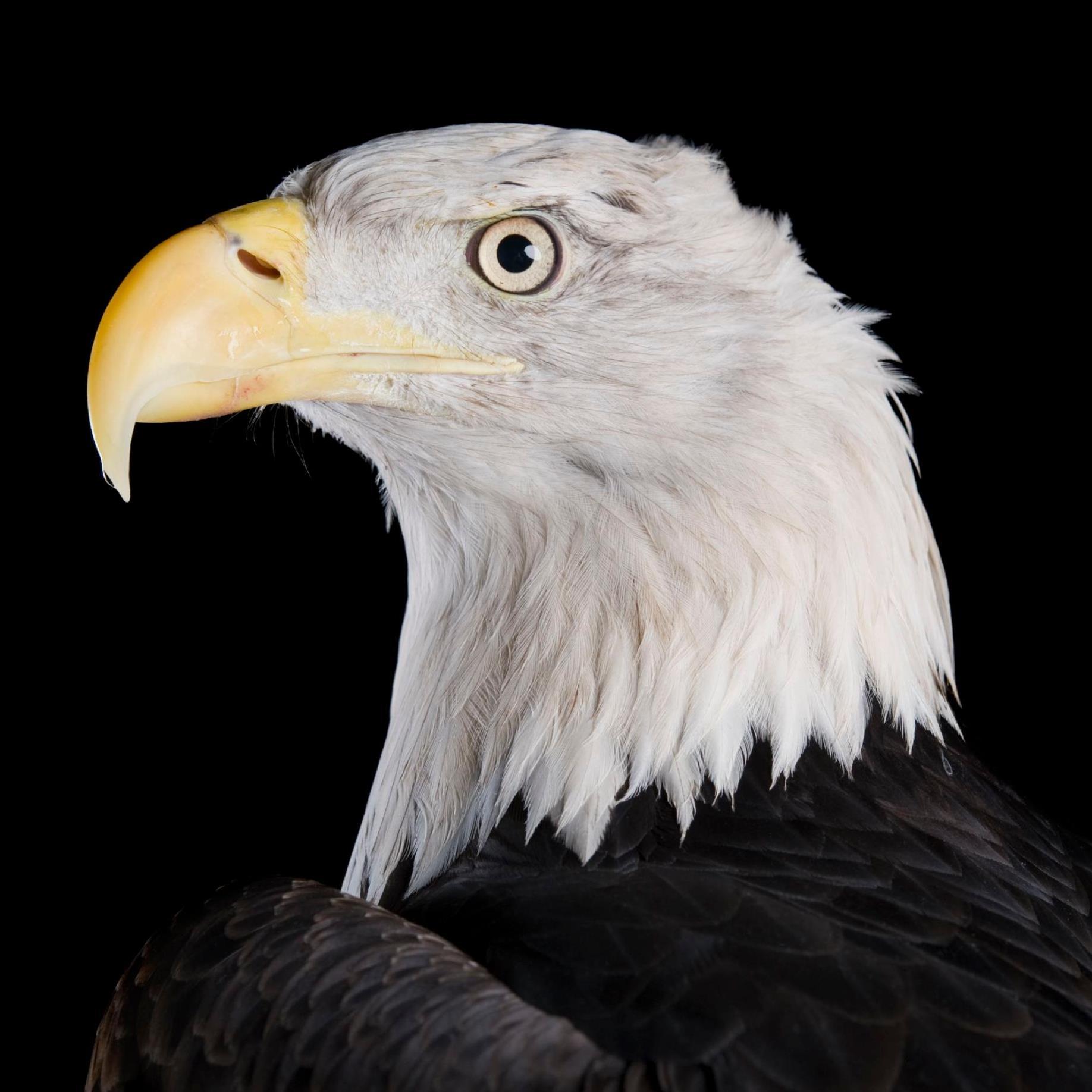 eagle selary profile investagrams